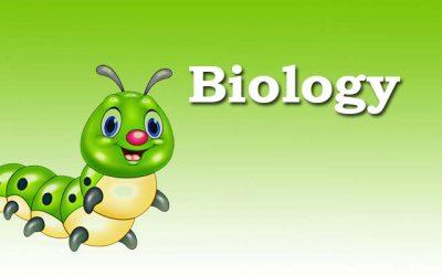 Biology   ചെറുകുടല്